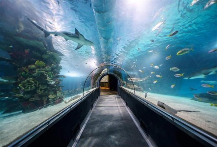 Trabzon'a Tünel Akvaryum